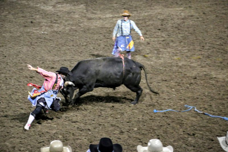 Een rodeo en bull race in Cody