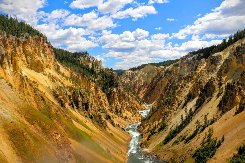 Canyon Yellowstone