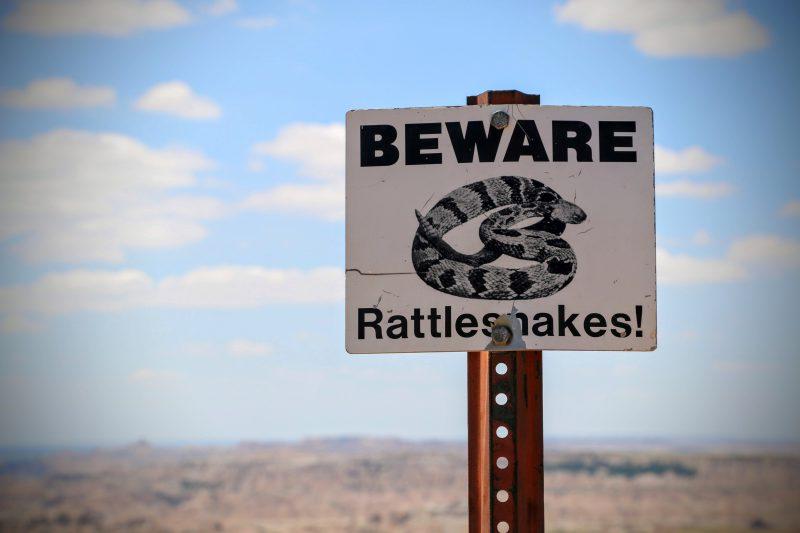 Ratelslangen in Badlands