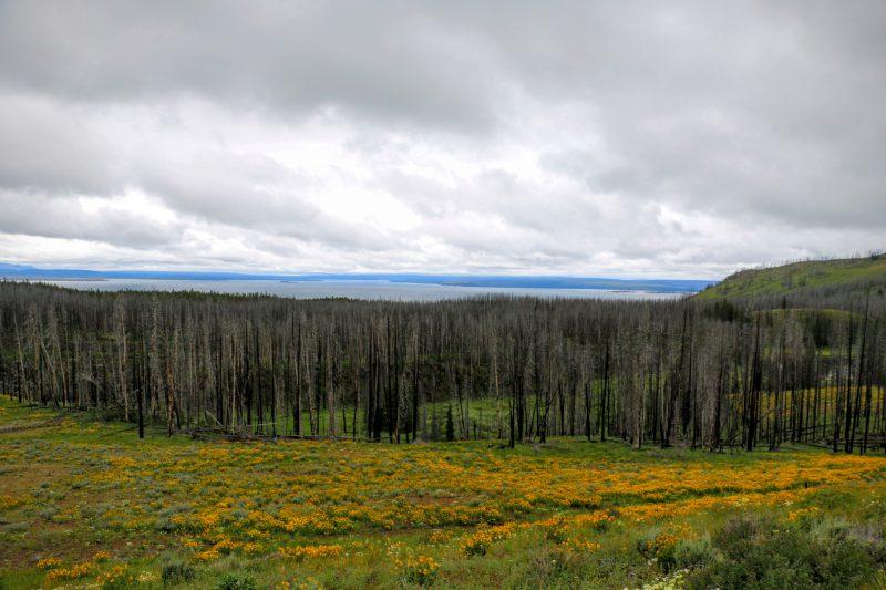 Mooie kleuren in Yellowstone