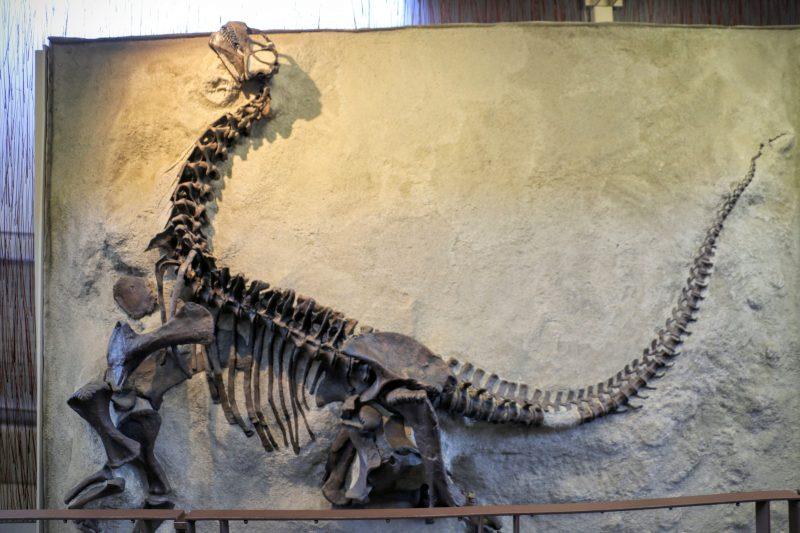 Vindplaats dinosauriërs in Amerika