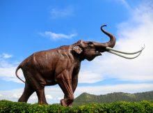 Reisverslag Hot Springs - The Mammoth Site