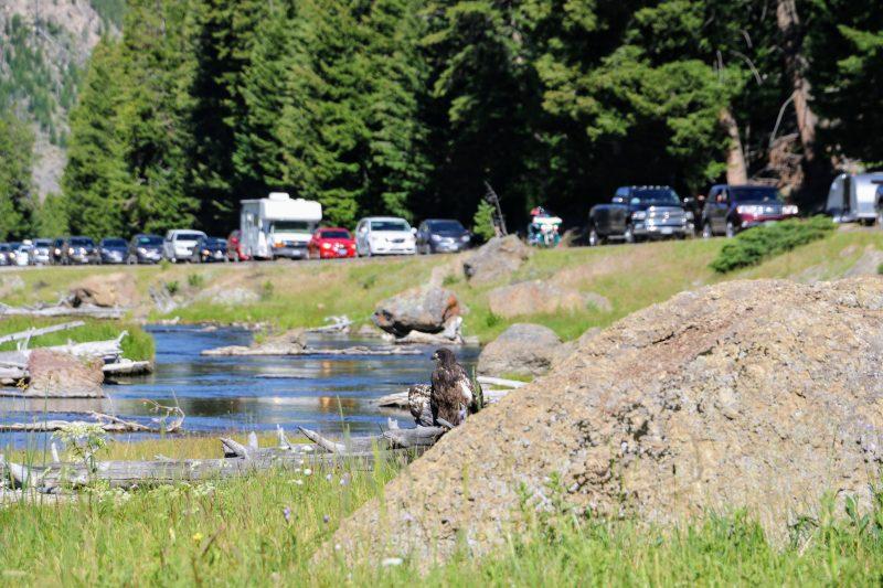 Van Yellowstone naar Grand Teton NP